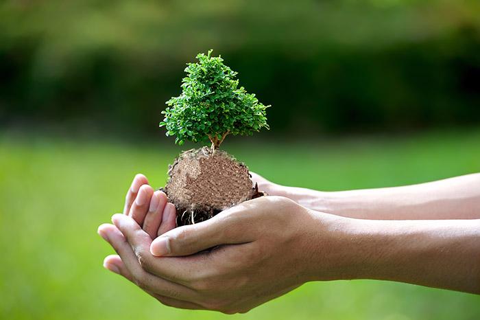 Viên nén gỗ tốt cho môi trường