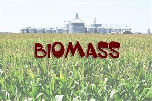 Biomass là gì? Lợi ích của biomass
